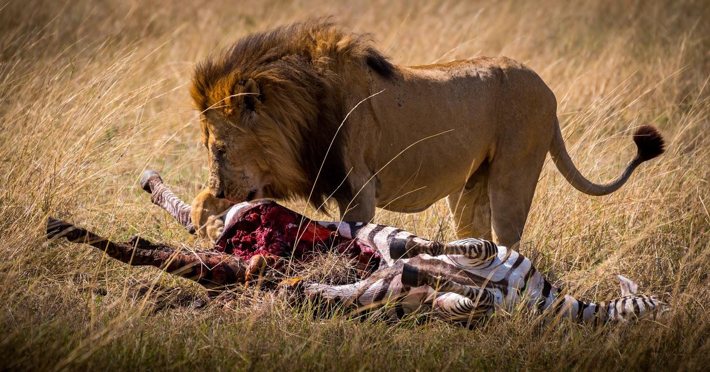 masai-mara-sept-24-16-142
